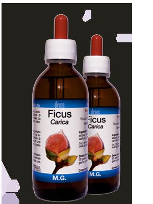 FICUS Carica M.G. • 50 / 150 ml