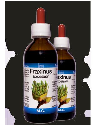 FRAXINUS Excelsior M.G. • 50 / 150 ml