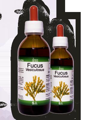 FUCUS Vesiculosus T.M. • 50 / 150 ml